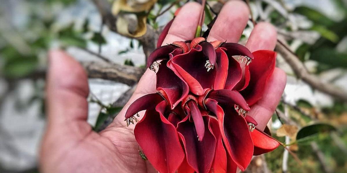 Introducción a la botánica reconocimiento especies
