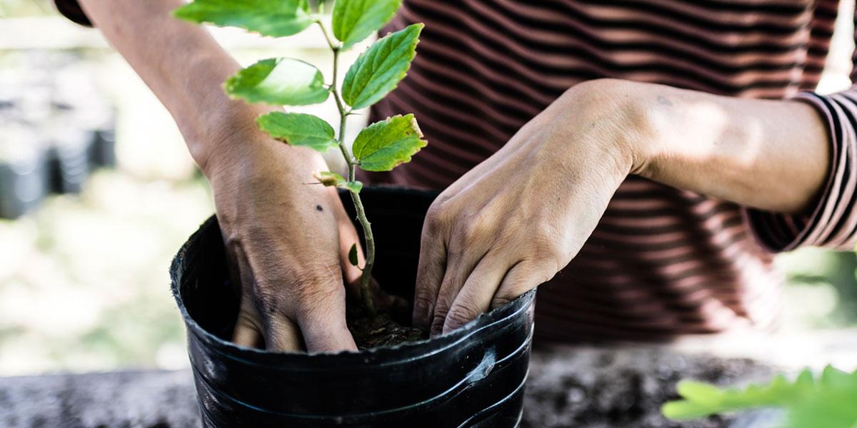 cultivo flora autóctona