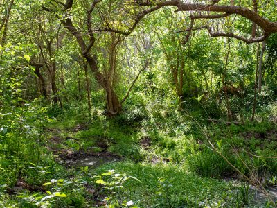 Reserva Natural Náutico de Escobar